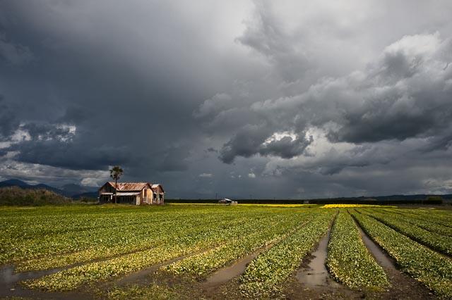 farm-and-rain.jpg